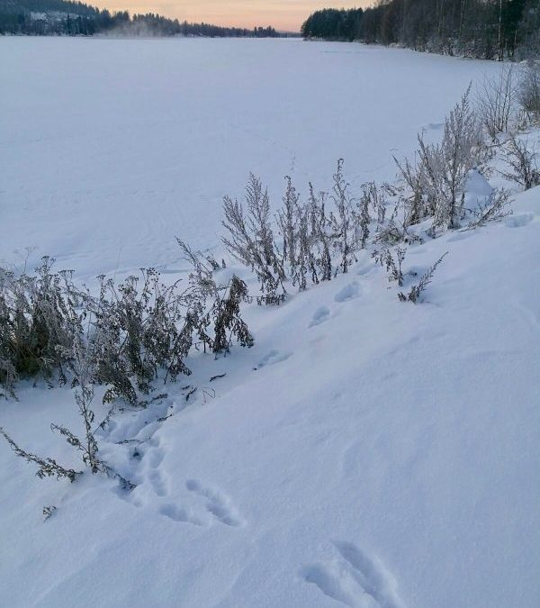 Lapland and some winter wonders!