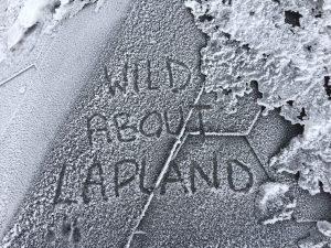 Wild About Lapland Logo