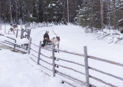 Reindeer rides can be fast!