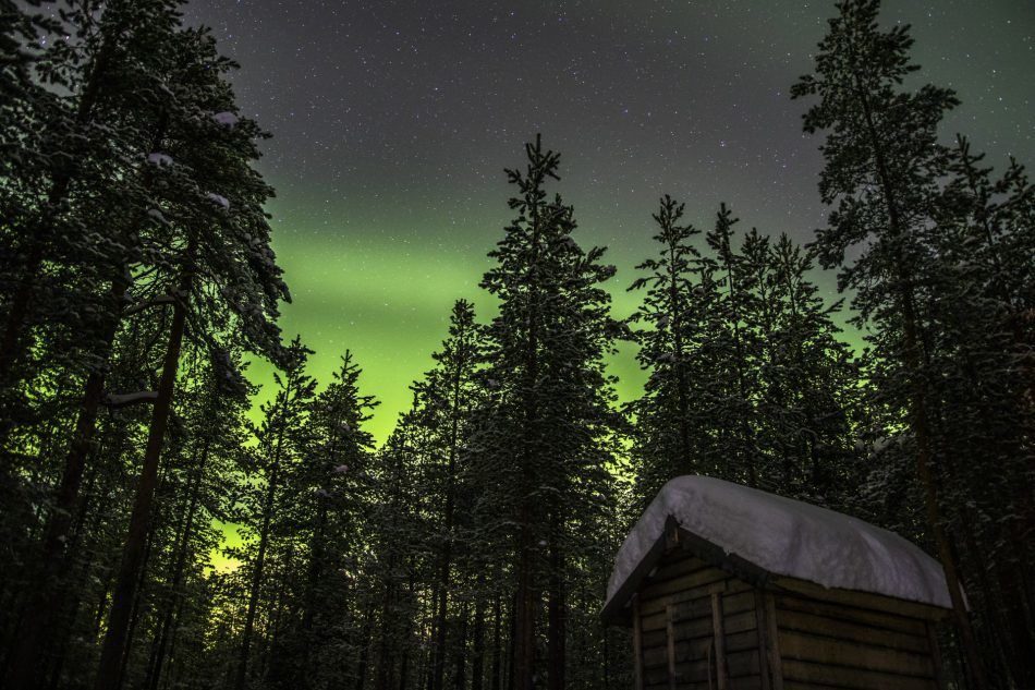 Wild About Lapland, Rovaniemi, Finnish Lapland