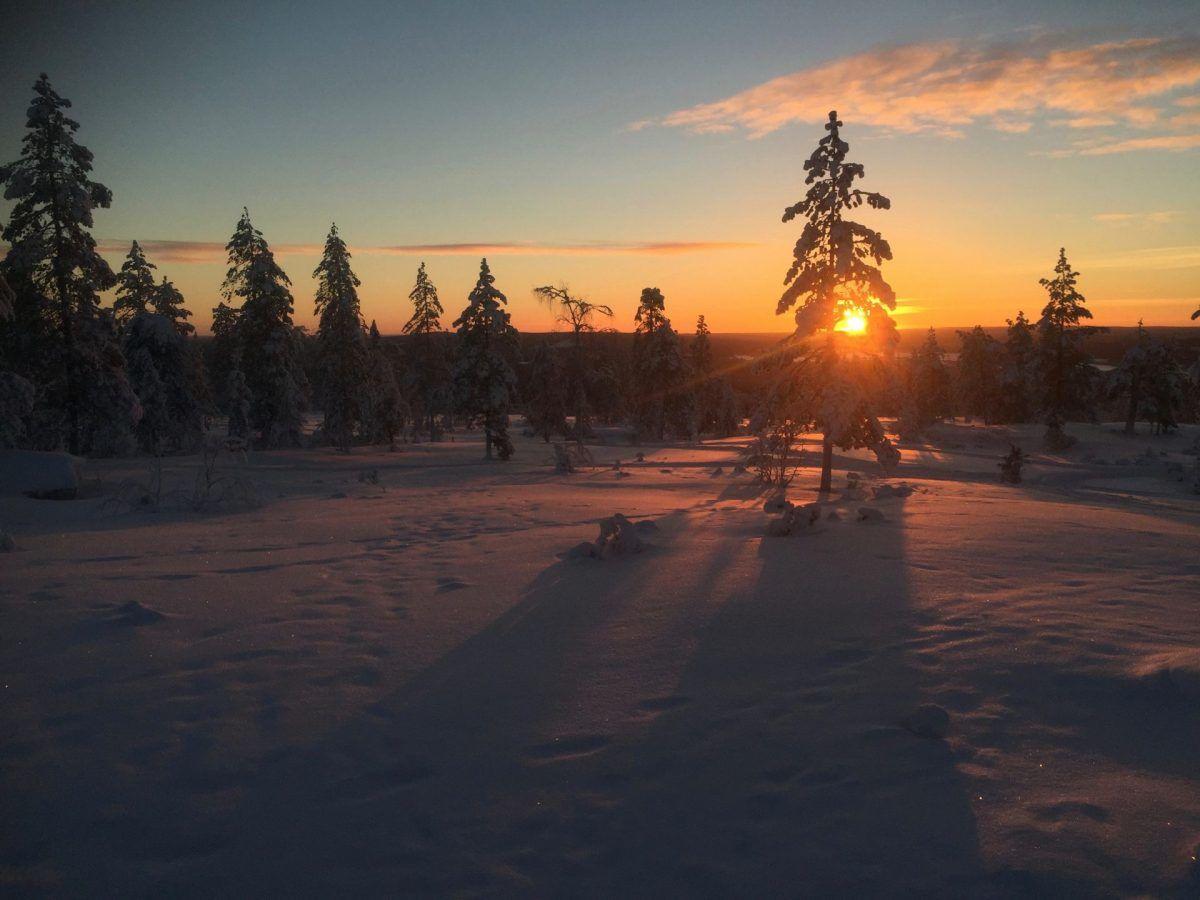 Polar night - Wild About Lapland