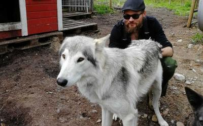 An Incredible Encouter with Wolfdogs