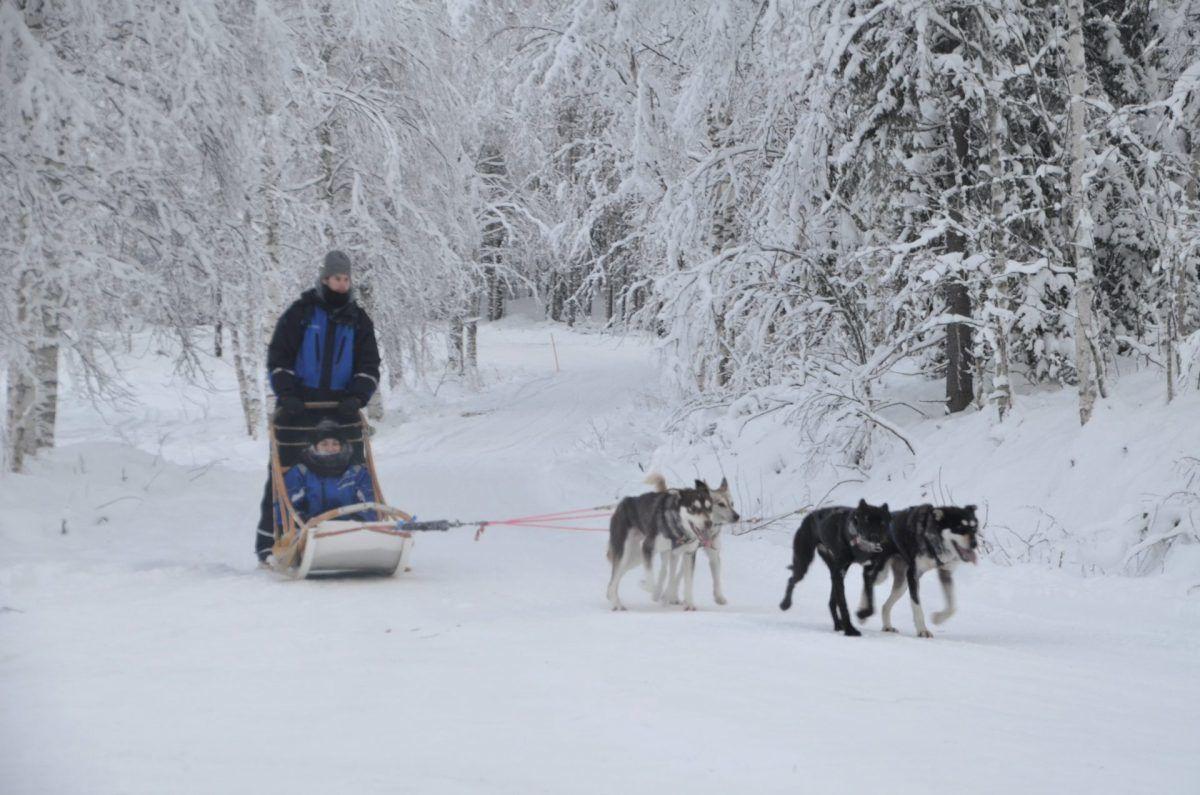 Husky Rovaniemi sled