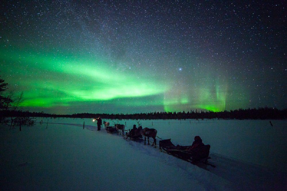 Aurora reindeer Rovaniemi