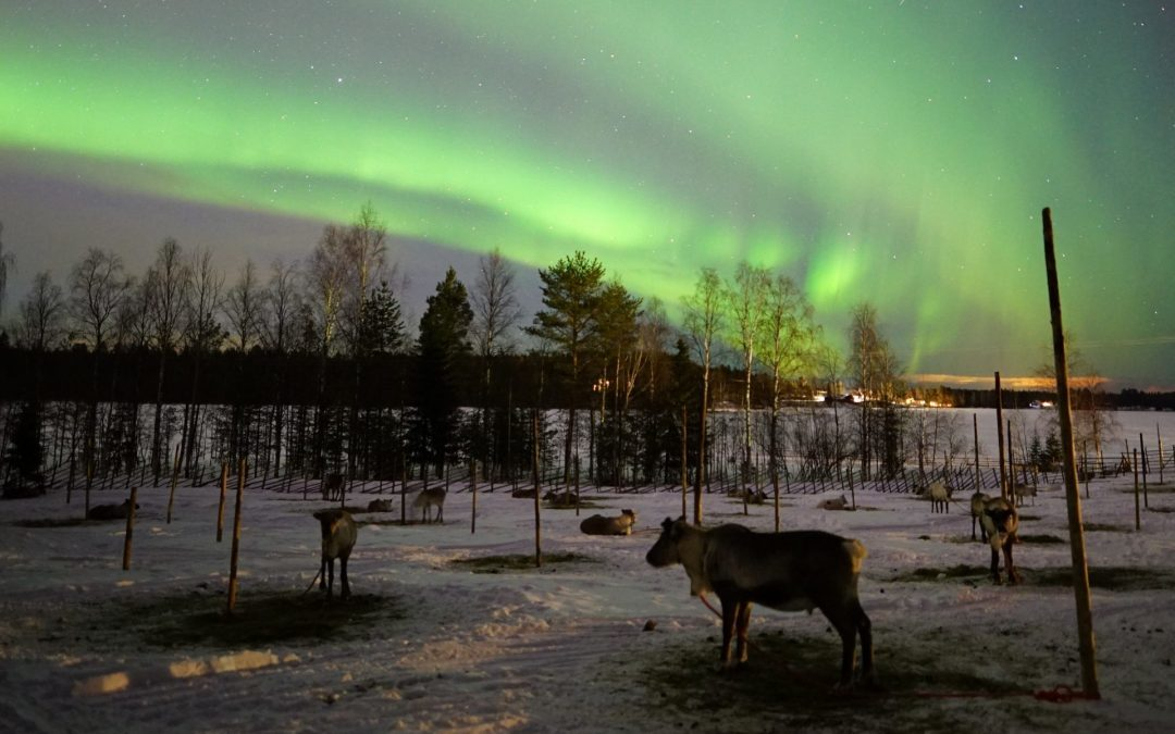 THE NORTHERN LIGHTS TOURS: 20 MARCH 2020