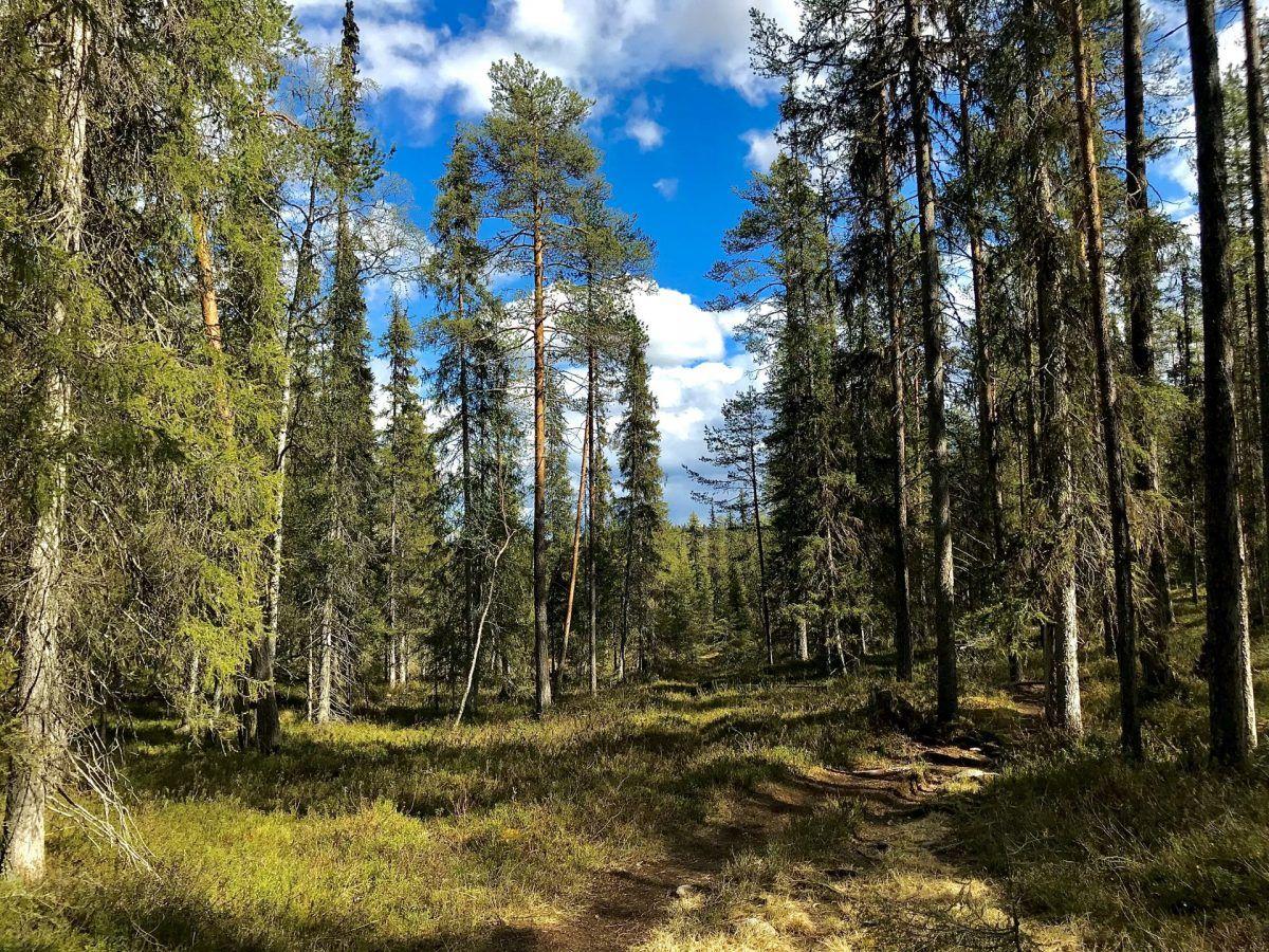 Summer Rovaniemi