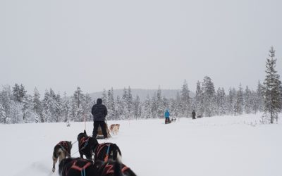 Dog Sledding Adventure at our favorite Husky Farm