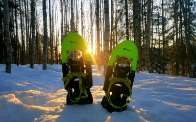 Snowshoeing in the Taiga Forest