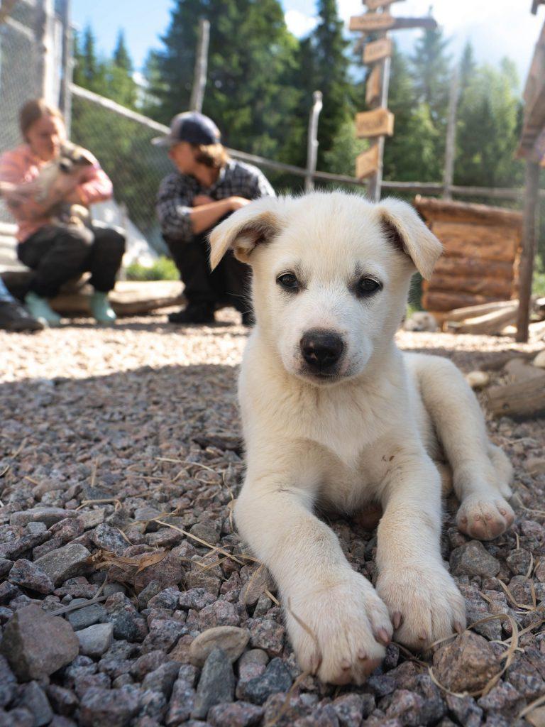 Husky Farm Summer