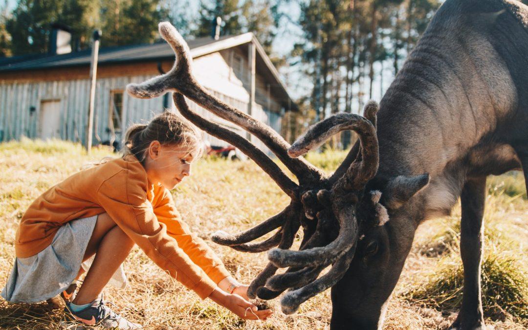 Luxury Trips in Lapland