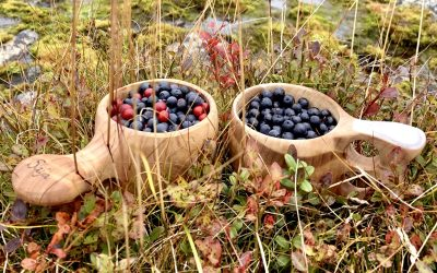 Autumn in Lapland: Have you breathed today?